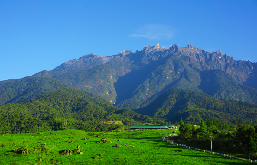 Mt Kinabalu from Desa Cattle