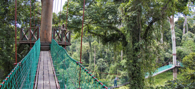 The 11 Best Forest Canopy Walkways In The World