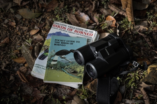 A First Time Birdwatchers Guide to Sabah