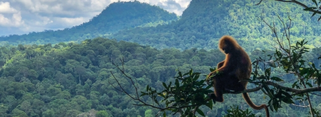 Things To Do in Danum Valley