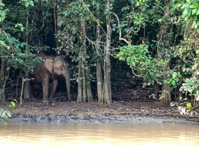 2 Week Borneo Itinerary – Perfect For Adventure And Wildlife Encounters In Sabah