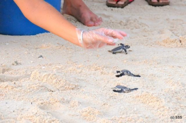 Mabul Turtle Conservation