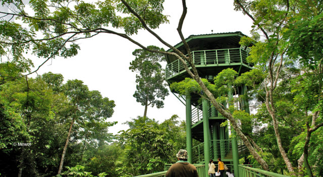 Rainforest Discovery Centre (RDC)